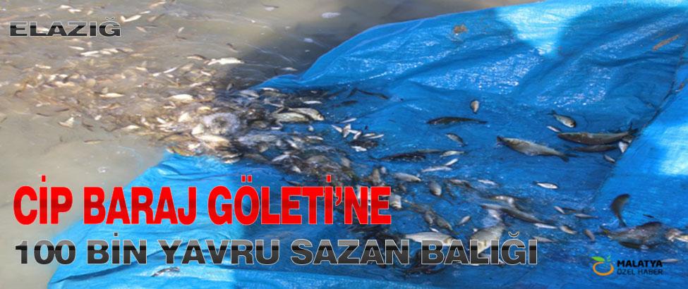 Cip Baraj Göleti'ne 100 Bin Yavru Sazan Balığı