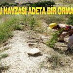 Boztepe Baraj Havzası Adeta Bir Orman'a Dönüştü
